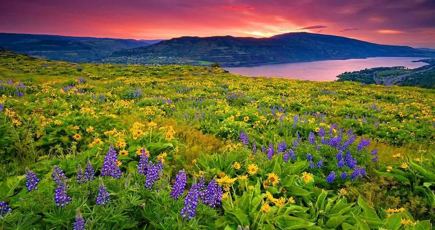 Valley of Flowers Trek3